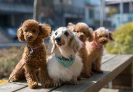 見逃さないで!犬の老化5つのサイン