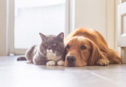 ペットの健康長寿を願う、すべての方へ。