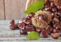 栗の薬膳的効能と使い方