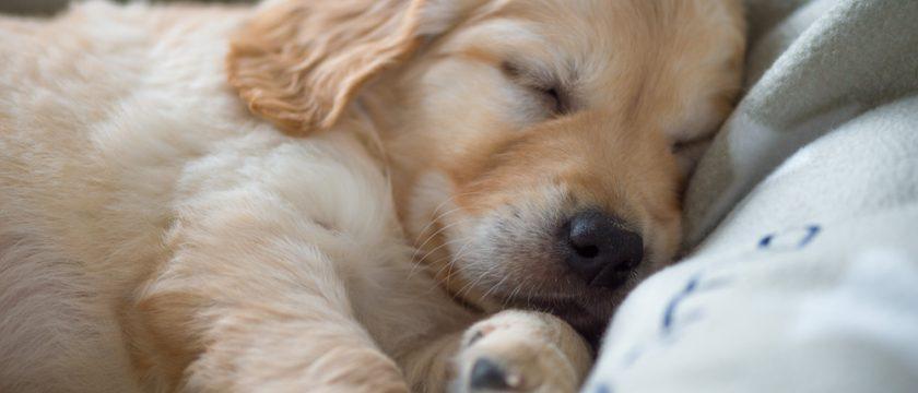 寒〜い冬を、愛犬と快適・健康的に過ごすために
