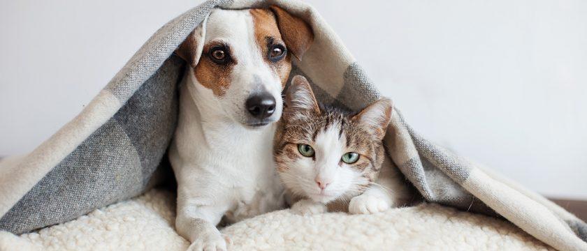 犬も猫も人間も、同じ生き物として考えましょう
