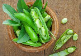 空豆の薬膳的効能と使い方