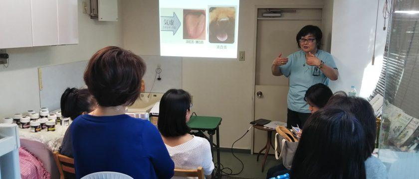 みなみ成城動物病院様にて【飼い主様向け 中医学体質診断セミナー】を開催しました