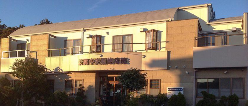 安房中央動物病院様にて【ペットシッターさん、ドッグトレーナーさん向け】中医学講座を開催しました